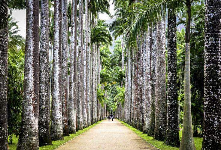Jardim Botanico | A journey through Rio de Janeiro