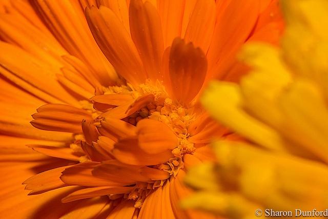 Something orange!, via Flickr.: Photo