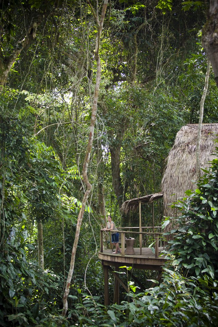 Africa Map Congo River%0A Trek for Africa u    s great apes  u     gorillas  u     chimpanzees  from the comfort of  Ngaga Camp  a pioneering ecolodge set in the Republic u    s pristine  rainforest