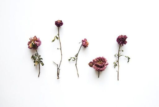 dried rose collection photograph