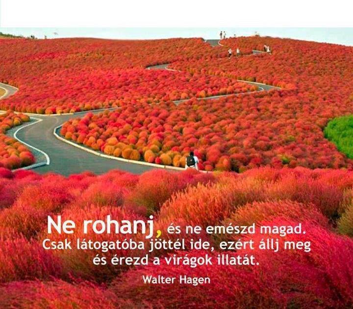 Walter Hagen, amerikai golfjátékos gondolata. A kép forrása: Kálmán Bakó # Facebook