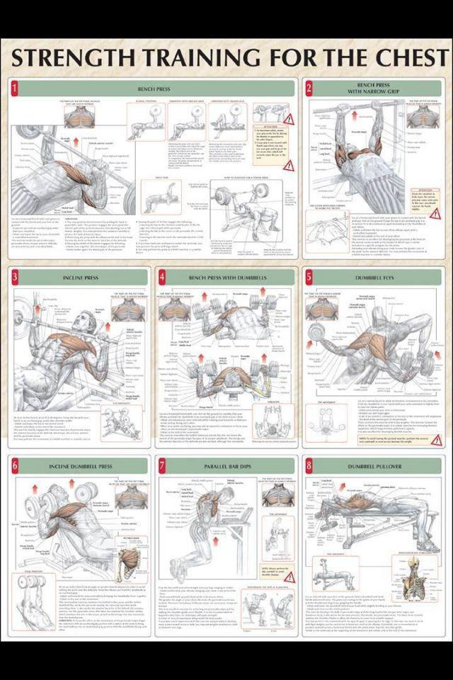 Beginner Chest Workout At Gym – Blog Dandk