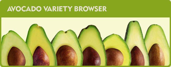 Avocado Plant Varieties | California Avocado Commission