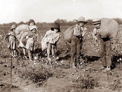 Old Picture of the Day: Cotton Pickers.. Mom said they used to pick cotton and she hated it, she said the bolls would cut into your palm...and it was back breaking work..