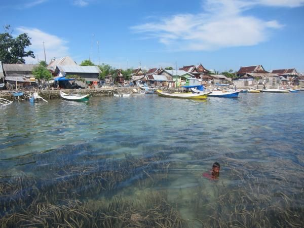 Zeegrasvelden ruimen ziekmakende bacteriën op die via rioolwater in de oceaan belanden.