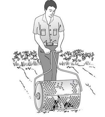 planting grass seed for dummies