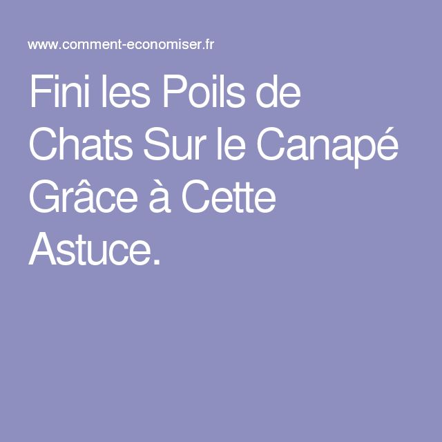 best 25+ poil de chat ideas on pinterest | chaton sans poils, des