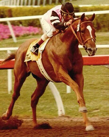 LAST Triple Crown Winner Affirmed, unless California Chrome wins the Belmont this year......