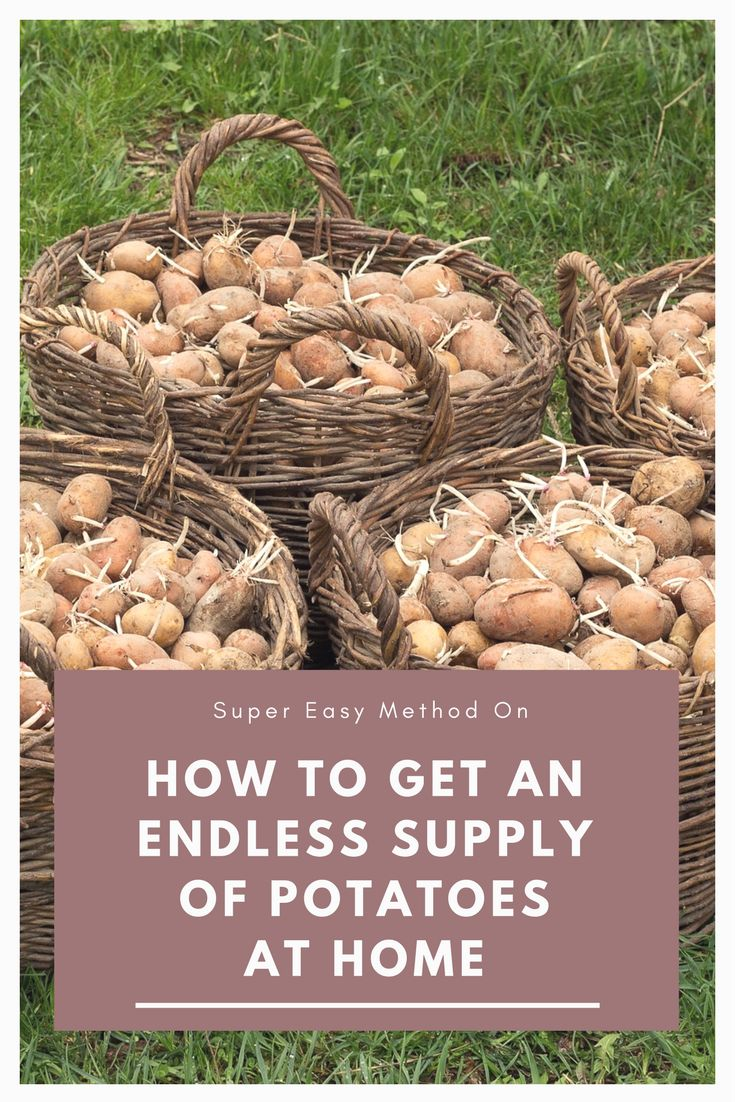 Super Easy Method On How to Get an Endless Supply of Potatoes at Home