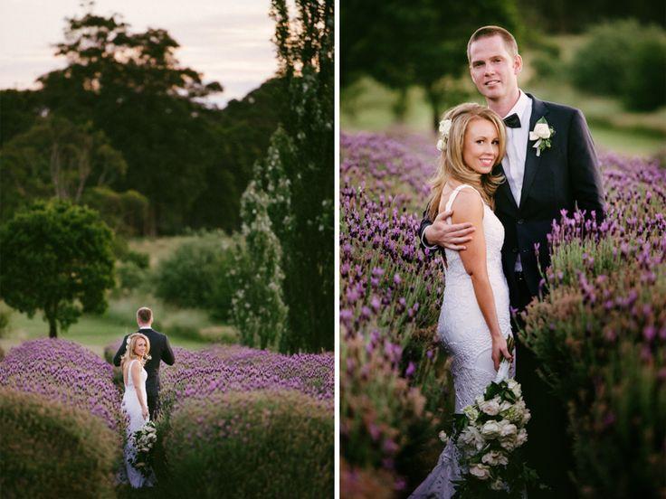 Daylesford wedding at Sault lavander farm. Lavander perfection. www.shaunguestphotography.com.au