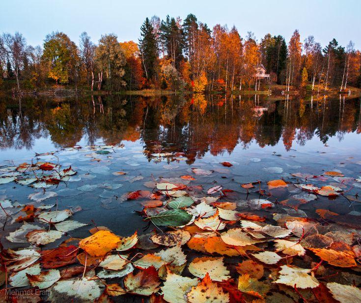 Myllyjärvi - Jyväskylä, Finland. Autumn leaves by m-eralp