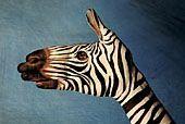 Zebra - Ricerca personale -