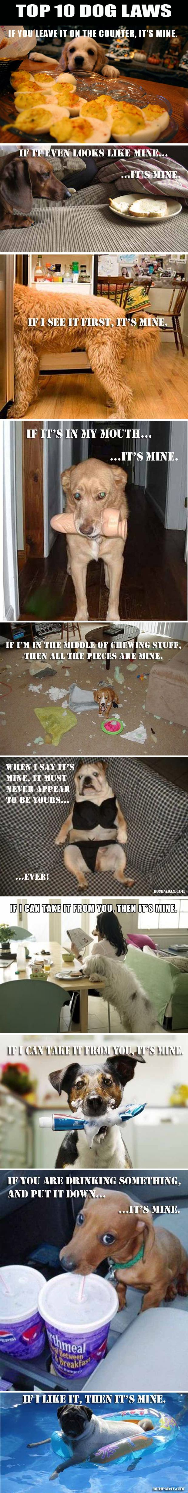 Funny Dog Laws – 10 Pics