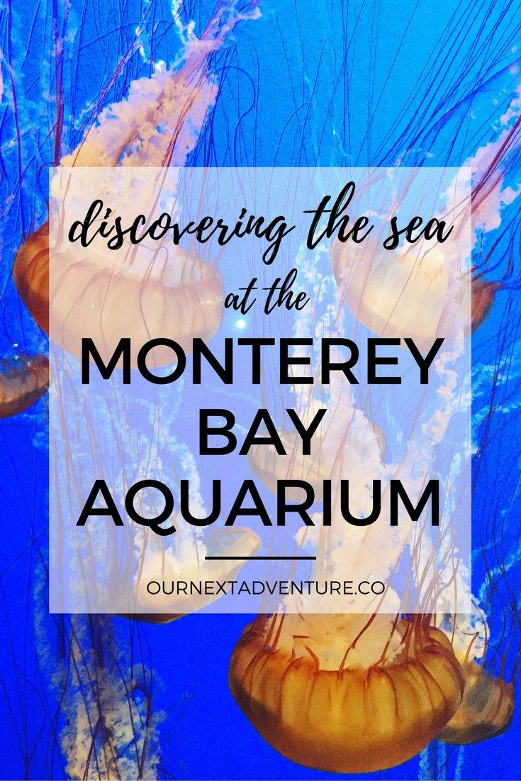 Why a visit to the Monterey Bay Aquarium should be on family's California bucket list // Family Travel | Travel with Kids | California Road Trip