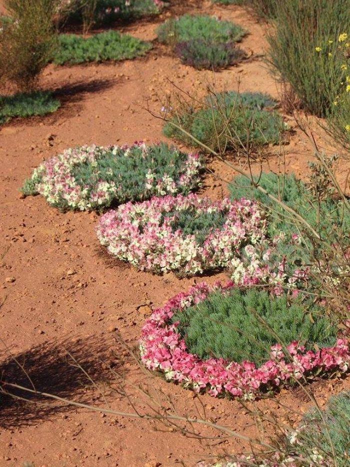 Wreath flowers Mid West WA