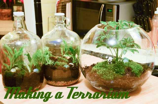 Terrarium tutorial from my friend Katy.: Enclosed Terrariums, Terrarium Tutorial, Crafty Projects, Diy, Gardening Terrarium, Friend, Crafts