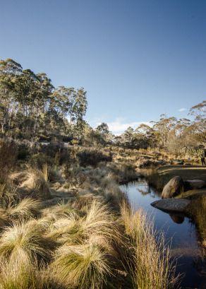 Corin Forest Near Canberra