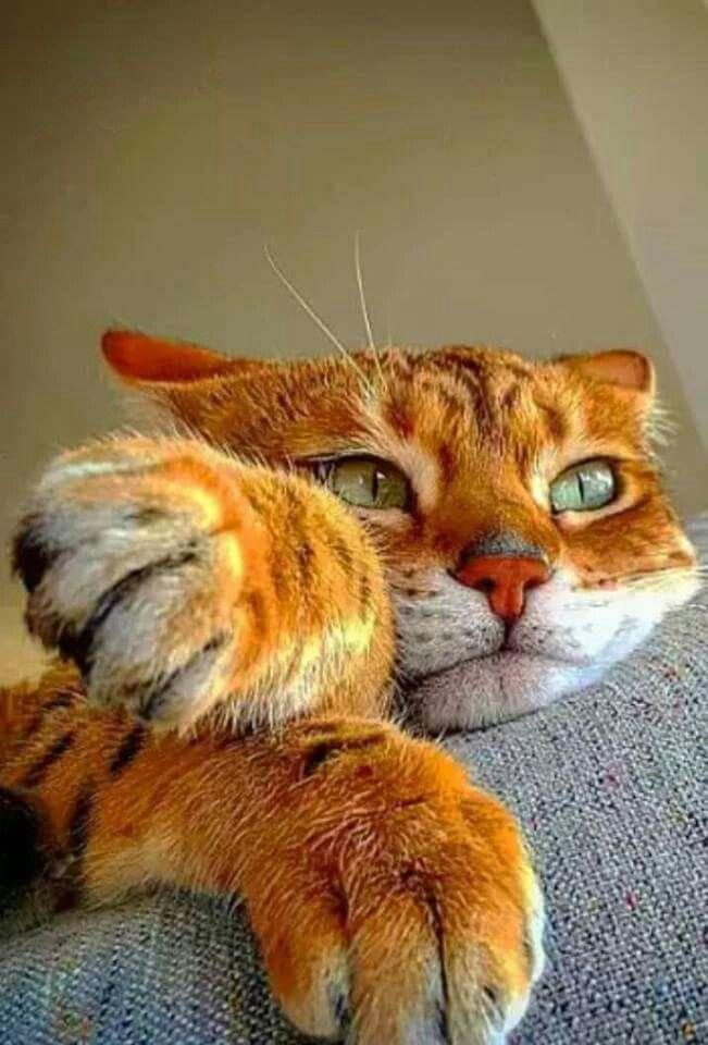 Orange Marmalade with gorgeous green eyes, looks like a street tough.