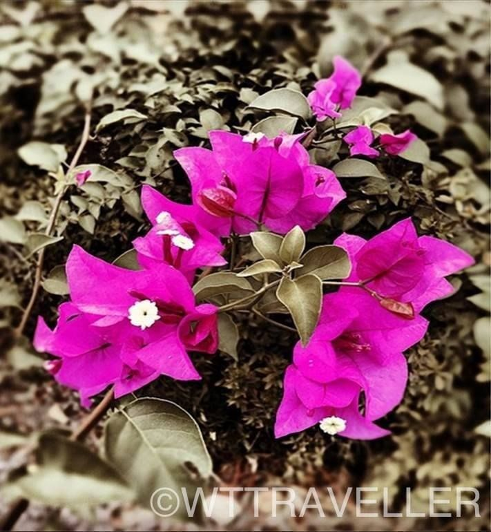 Flowers at a #resort in #Nakhonratchasima #Thailand Find #hotel #deals in #Nakhonratchasima GO > http://www.agoda.com/city/nakhonratchasima-th.html?cid=1640564   #travel #vacation #holiday #accommodation #trip