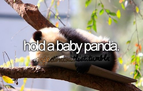 Life List Hold A baby panda #bucketlist http://muzictomyears.com/100-things-i-want-to-do-in-life-life-list/