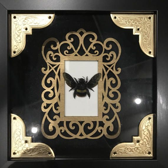 Hey, I found this really awesome Etsy listing at https://www.etsy.com/listing/517853249/real-carpenter-bee-taxidermy-display