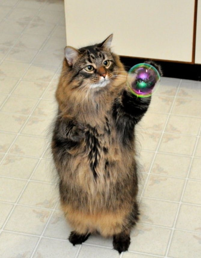 Squishy Nose Cat : 146 best images about =^..^= Bubble cats on Pinterest Cats, Bubble photography and Photos