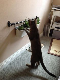 5 DIY Cat Play Spaces For very little money, you can create simple and fun playscapes for your cat.