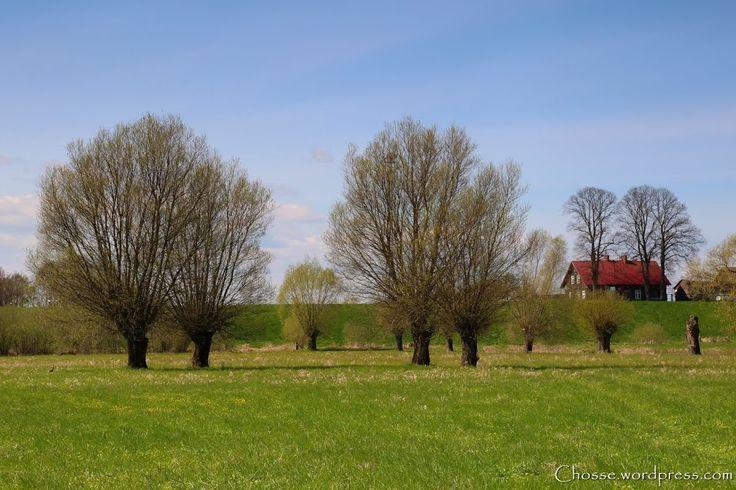 Miejscem do poszukiwań był Kiezmark, a dokładnie tereny zalewowe Wisły. Odwiedziłem też przejazdem jedno z najbardziej charakterystycznych miejsc czyli dom podcieniowy w miejscowości Trutnowy.