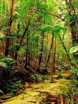 Fraser Island, Queensland, Australia.