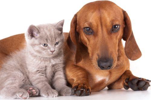 Animale domestico: cosa scegliere tra cane e gatto? - http://www.baubaunews.com/miscellanea/animale-domestico-cosa-scegliere-tra-cane-e-gatto/ http://www.baubaunews.com/wp-content/uploads/2016/08/Cane-e-gatto.jpg