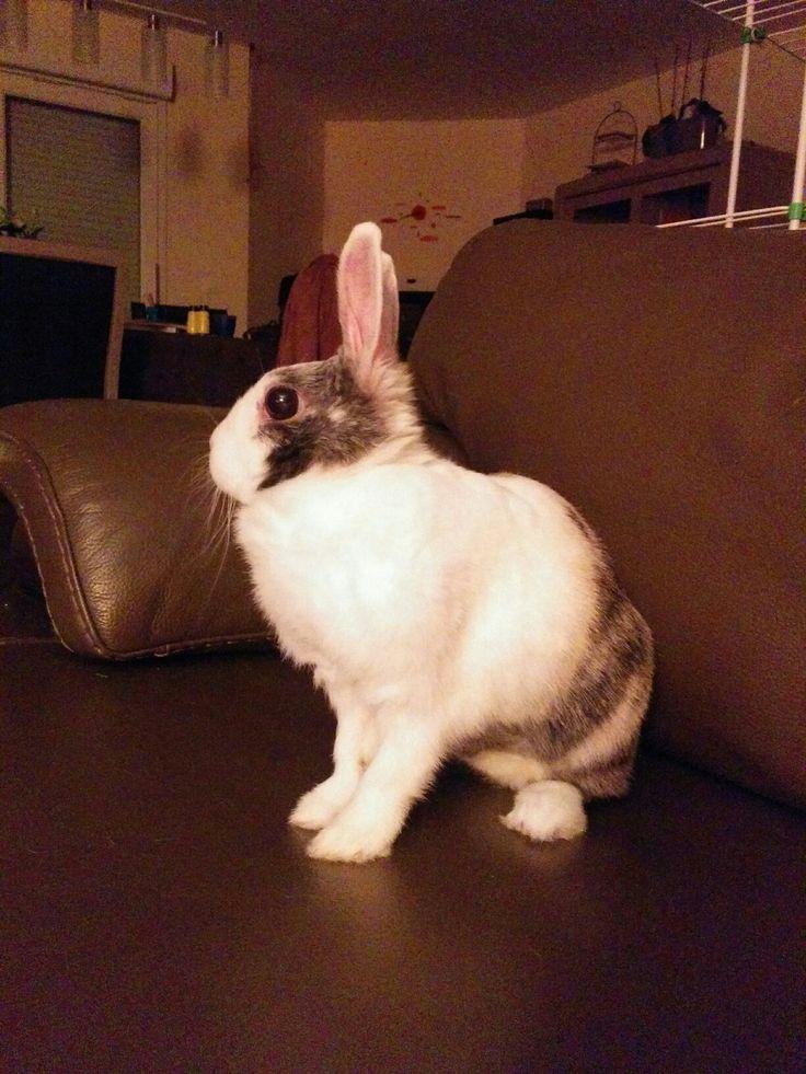 Jolie lapine