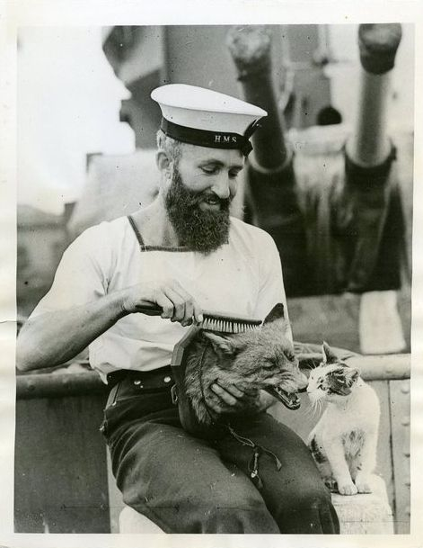 Sailor Brushing a fox, cat smelling fox- just really interested in what is going on here...