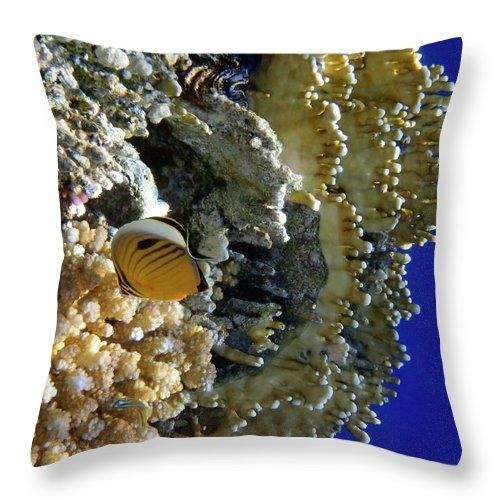 My favorite fish, the Exquisite Butterflyfish, checks out the corals in the Red Sea. And I check out the Butterflyfish :) with my camera. Pillow design from my photo. Johanna Hurmerinta