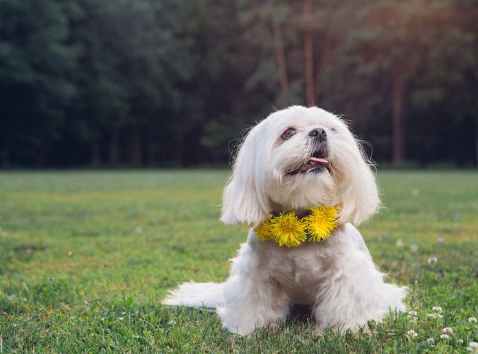 """Yes, Flower """"Crowns"""" for Dogs Exist"""