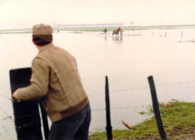 Martien en Wilbert Romviel banen zich met Silady (Amor x Nilady v. Irak) een weg door het water op de uiterwaarden in Ooy (bij Nijmegen). Vader Tini staat klaar om ze op te vangen.