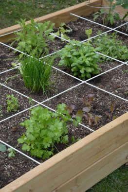 starten met tuinieren in een vierkante meter tuin