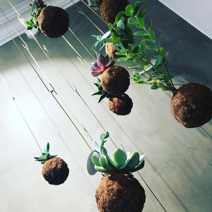 """33 Synes godt om, 1 kommentarer – Bloom (@bloom_cph) på Instagram: """"Vi har fået en ny sending smukke planteplaneter hjem idag  #bloomcph #planteplaneter #kajaskytte…"""""""