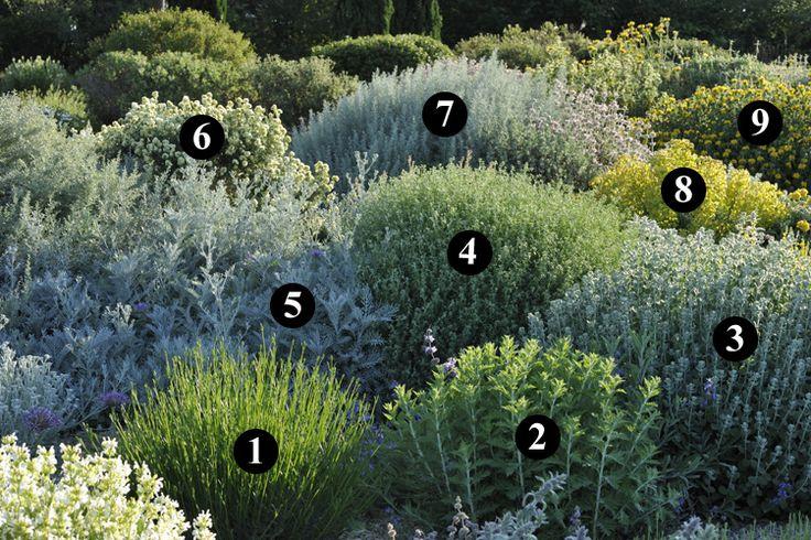 1 : Lavandula angustifolia 'Folgate'  2 : Perovskia 'Blue Spire'  3 : Ballota acetabulosa  4 : Dorycnium pentaphyllum  5 : Centaurea cineraria  6 : Anthyllis barba-jovis  7 : Artemisia arborescens 'Carcassonne'  8 : Euphorbia characias subsp. wulfenii  9 : Phlomis 'Le Sud'
