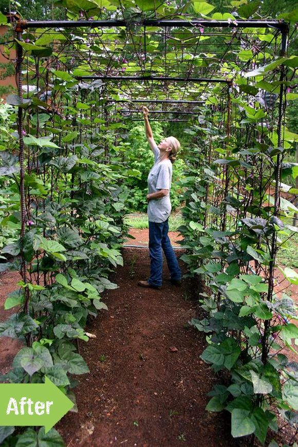 bean tunnel, veggie garden: fun way to structure climbing vine vegetables.