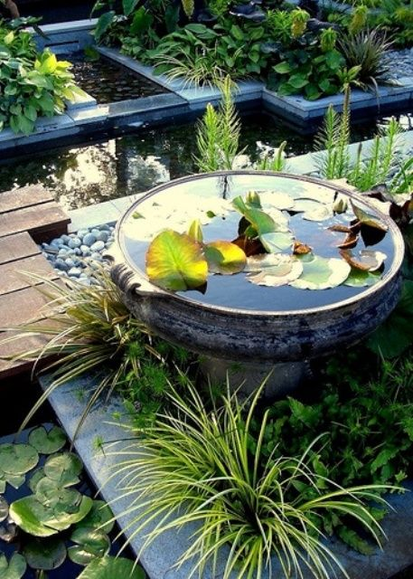 386 best images about water pots on pinterest garden for Pond in a pot ideas