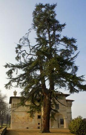 Villa Belvedere - Saluzzo