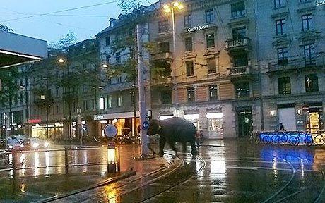 elephants escape circus | elephant_1652601a.jpg