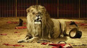 Lion de cirque
