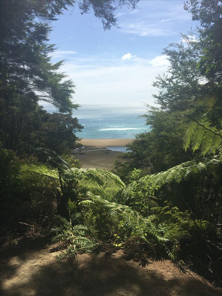 Unedited photo from Abel Tasman Walking Track in New Zealand.