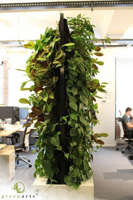 Mobilne zielone ściany w formie parawanów w biurze - listopad 2014