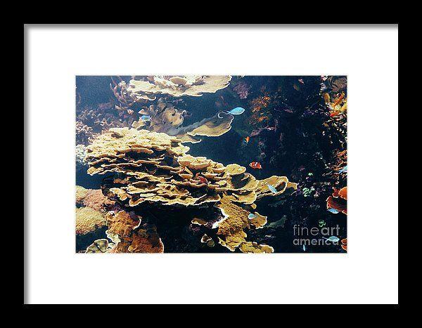 Small Coral Fish In Aquarium Framed Print