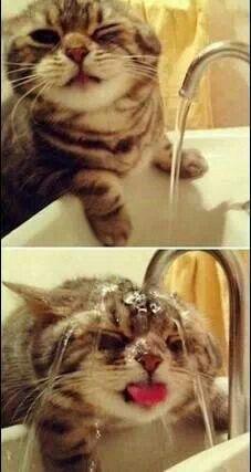 Amantes De Los Gatos, Si Les Gusta Esta Foto A Mi Me Encanta.