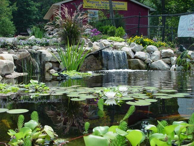 Backyard Fish Pond In The Philippines : own backyard with our custom designed water gardens featuring ponds
