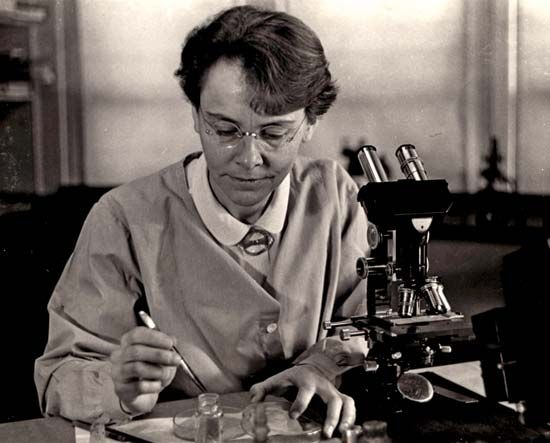 "Barbara McClintock (June 16, 1902-Sept. 2, 1992) was an American scientist whose discovery in the 1940s and 1950s of mobile genetic elements, or ""jumping genes"" won her the Nobel Prize for Physiology or Medicine in 1983. Her work was ahead of its time and for many years considered too radical-or was ignored-by her fellow scientists. Not until the late 1960s and 1970s did members of the scientific community began to verify her  findings. When recognition came, she was inundated with awards."