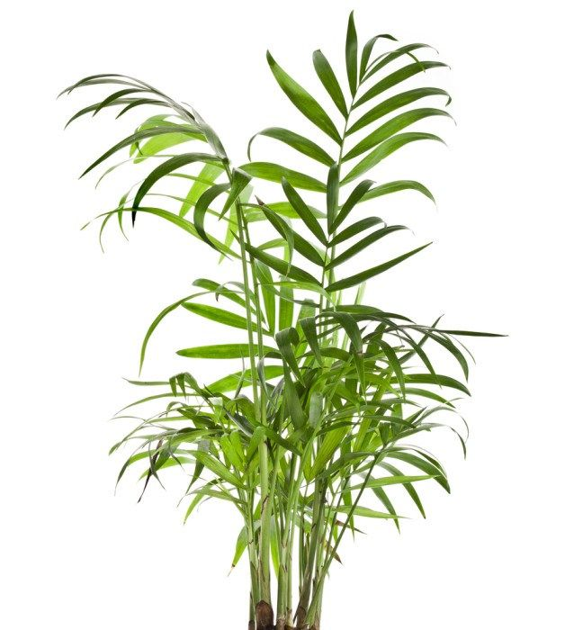 Oltre 25 fantastiche idee su piante ufficio su pinterest - Pianta da ufficio ...